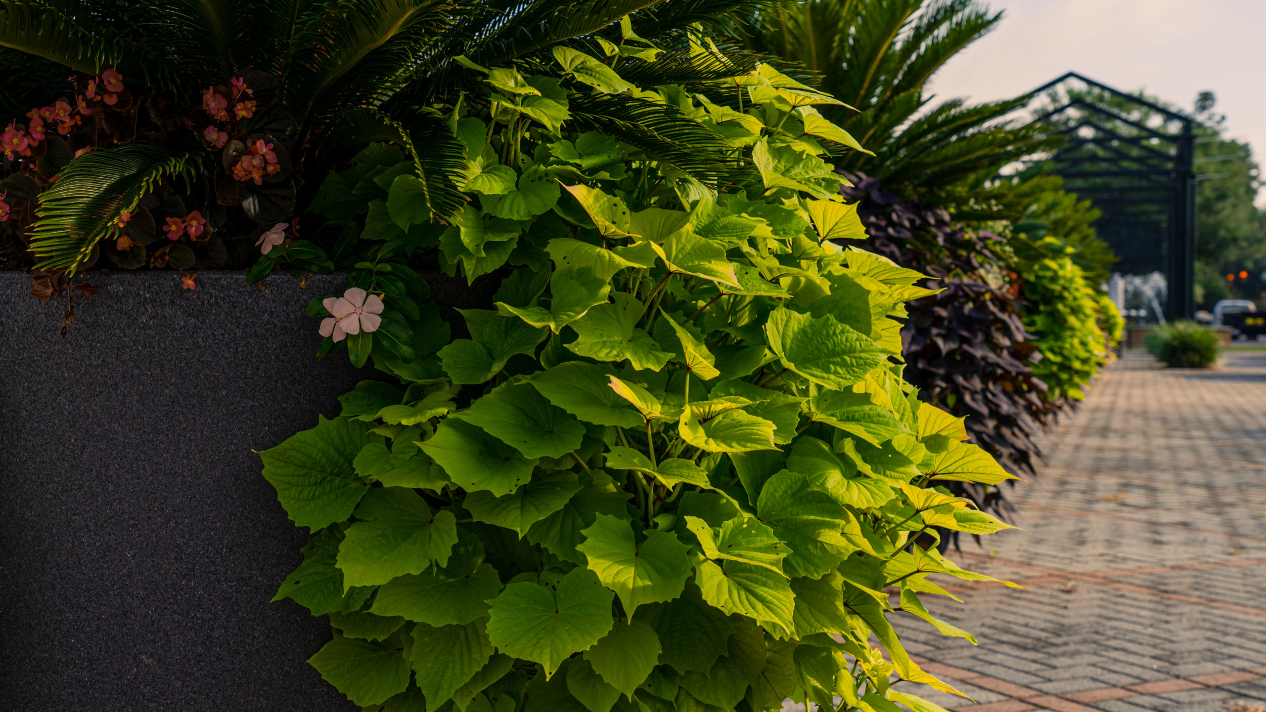 Plants Downtown Aiken